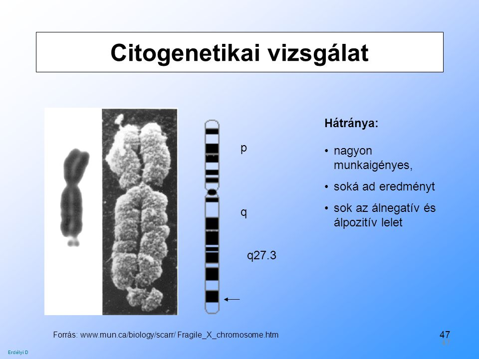 47 Citogenetikai vizsgálat p q q27.3 Forrás: www.mun.ca/biology/scarr/ Fragile_X_chromosome.htm Hátránya: nagyon munkaigényes, soká ad eredményt sok a