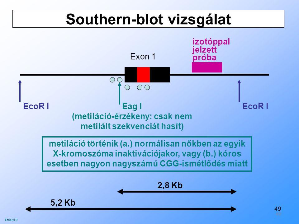 49 Southern-blot vizsgálat Exon 1 EcoR I Eag I (metiláció-érzékeny: csak nem metilált szekvenciát hasít) izotóppal jelzett próba 2,8 Kb 5,2 Kb Erdélyi