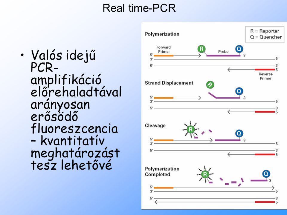 7 Real time-PCR Valós idejű PCR- amplifikáció előrehaladtával arányosan erősödő fluoreszcencia – kvantitatív meghatározást tesz lehetővé