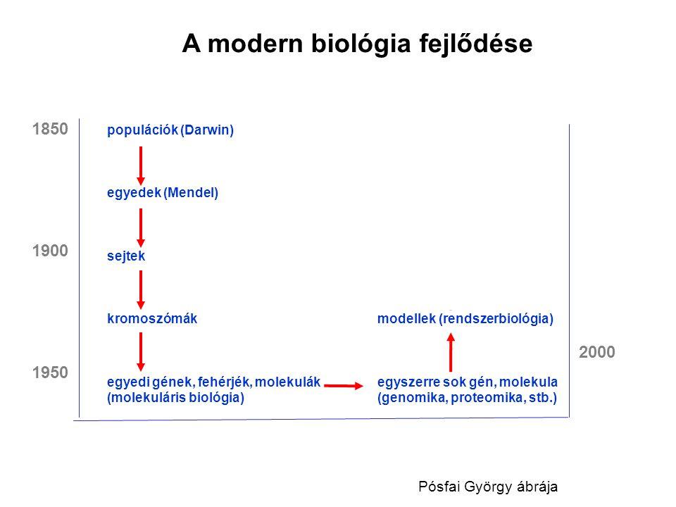 A modern biológia fejlődése populációk (Darwin) egyedek (Mendel) tervezett élőlények sejtek (szintetikus biológia) kromoszómákmodellek (rendszerbiológ