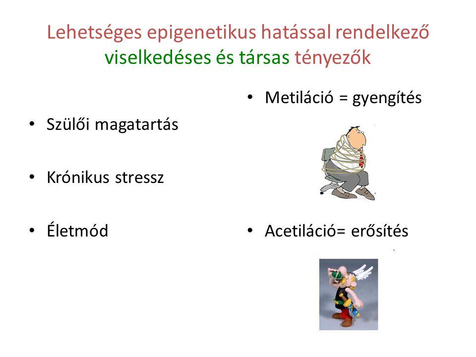 Lehetséges epigenetikus hatással rendelkező viselkedéses és társas tényezők Szülői magatartás Krónikus stressz Életmód Metiláció = gyengítés Acetiláci