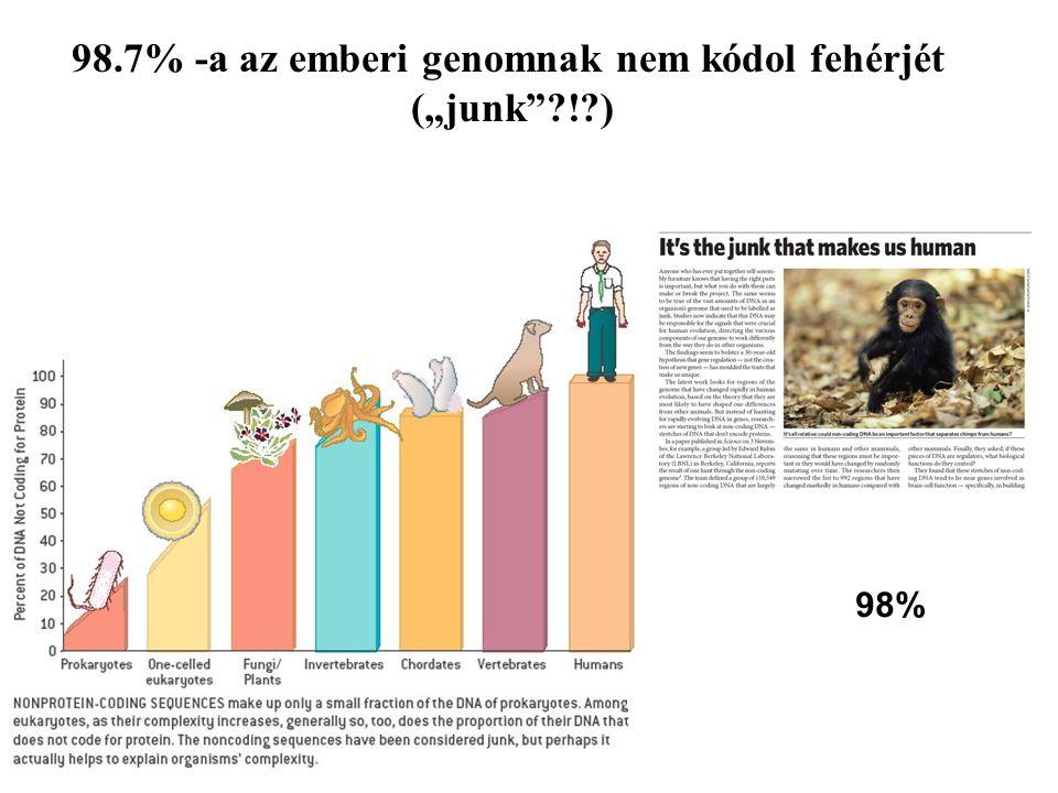 """98.7% -a az emberi genomnak nem kódol fehérjét (""""junk""""?!?) 98%"""
