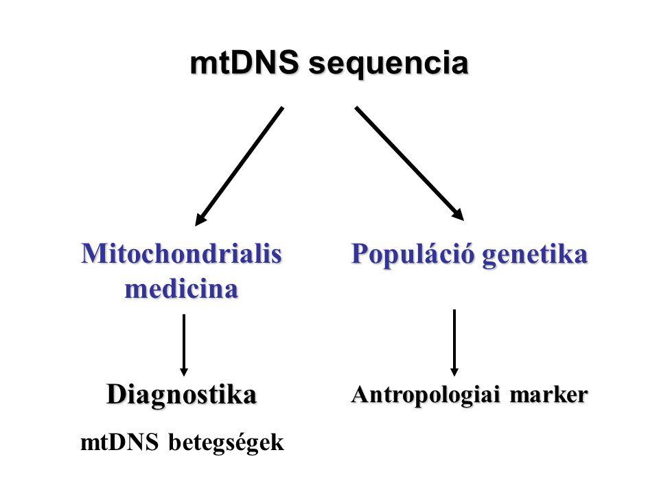 mtDNS sequencia Mitochondrialis medicina Diagnostika mtDNS betegségek Populáció genetika Antropologiai marker