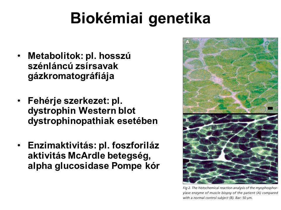 Biokémiai genetika Metabolitok: pl. hosszú szénláncú zsírsavak gázkromatográfiája Fehérje szerkezet: pl. dystrophin Western blot dystrophinopathiak es