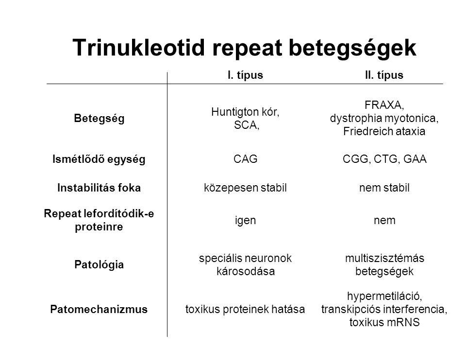 Trinukleotid repeat betegségek I. típusII. típus Betegség Huntigton kór, SCA, FRAXA, dystrophia myotonica, Friedreich ataxia Ismétlődő egységCAGCGG, C