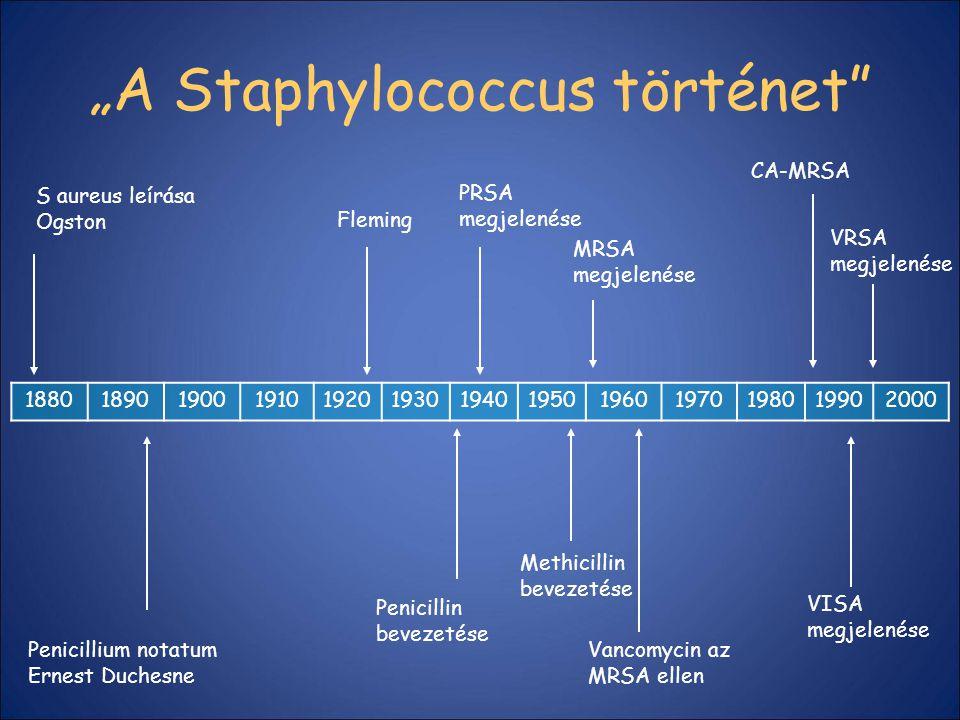 """""""A Staphylococcus történet"""" 1880189019001910192019301940195019601970198019902000 S aureus leírása Ogston Penicillium notatum Ernest Duchesne Fleming P"""