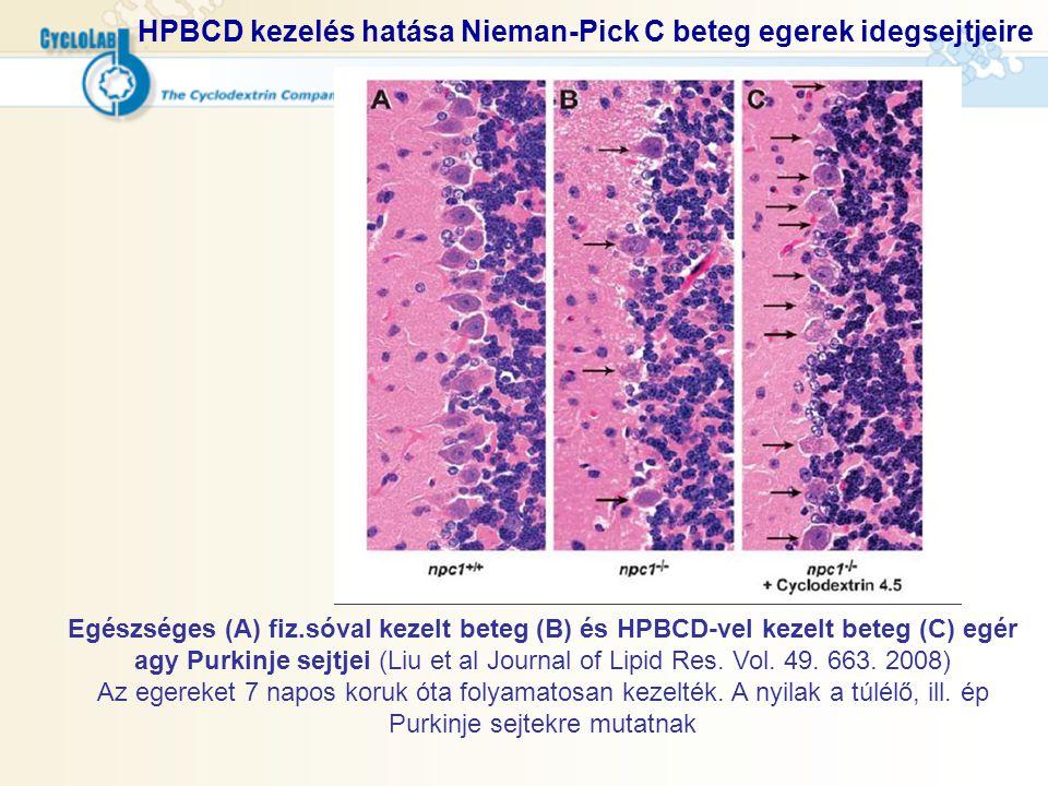 HPBCD kezelés hatása Nieman-Pick C beteg egerek idegsejtjeire Egészséges (A) fiz.sóval kezelt beteg (B) és HPBCD-vel kezelt beteg (C) egér agy Purkinj