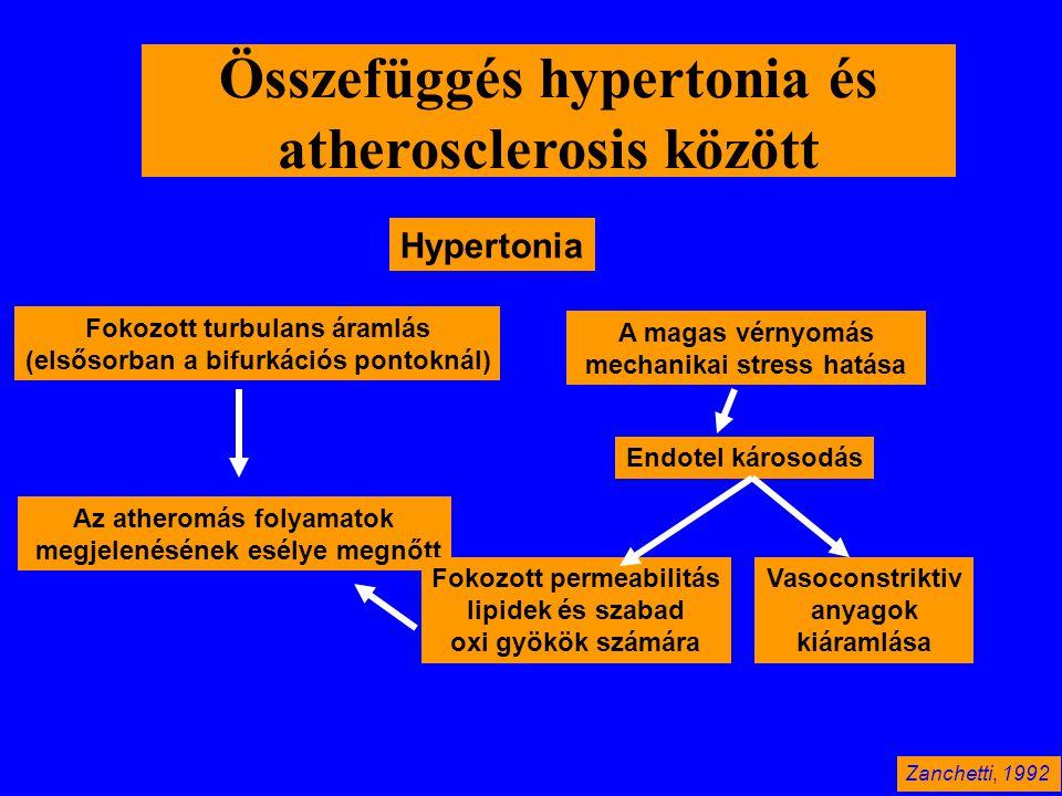 Összefüggés hypertonia és atherosclerosis között Hypertonia Fokozott turbulans áramlás (elsősorban a bifurkációs pontoknál) Az atheromás folyamatok me