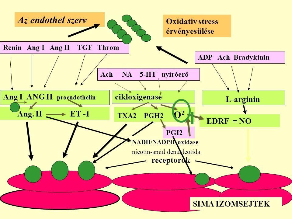 cikloxigenase Renin Ang I Ang II TGF Throm Ang I ANG II proendothelin Ang. II ET -1 Ach NA 5-HT nyiróerő TXA2 PGH2 O 2 ADP Ach Bradykinin L-arginin ED
