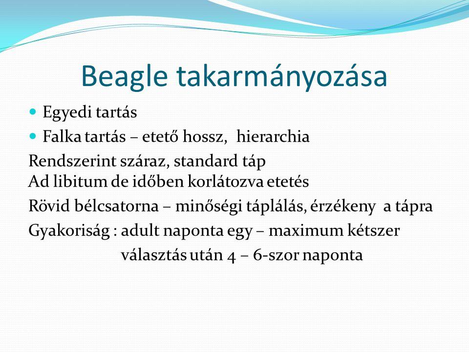 Beagle takarmányozása Egyedi tartás Falka tartás – etető hossz, hierarchia Rendszerint száraz, standard táp Ad libitum de időben korlátozva etetés Röv