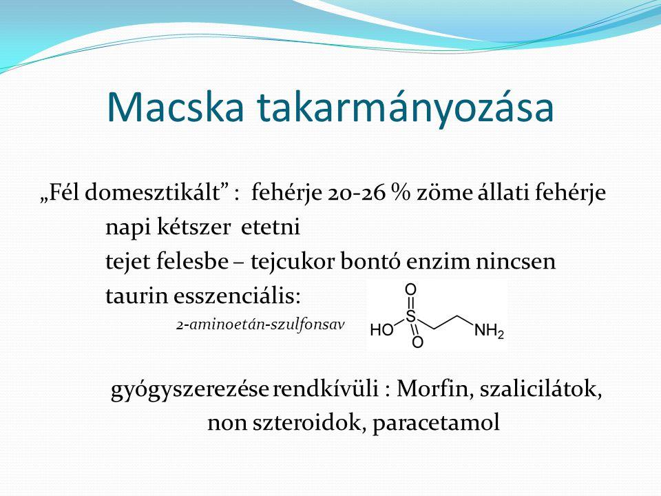 """Macska takarmányozása """"Fél domesztikált"""" : fehérje 20-26 % zöme állati fehérje napi kétszer etetni tejet felesbe – tejcukor bontó enzim nincsen taurin"""