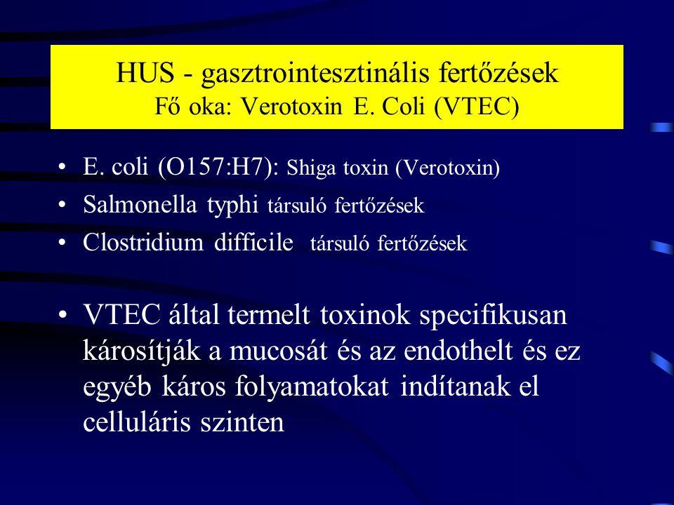 HUS - gasztrointesztinális fertőzések Fő oka: Verotoxin E. Coli (VTEC) E. coli (O157:H7): Shiga toxin (Verotoxin) Salmonella typhi társuló fertőzések