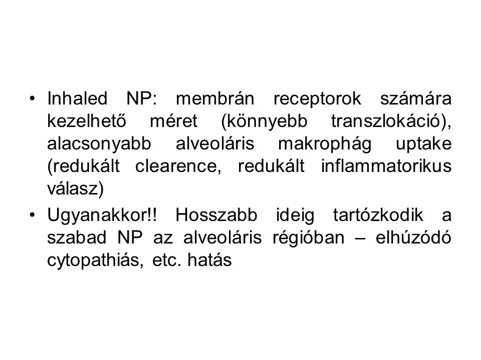 Inhaled NP: membrán receptorok számára kezelhető méret (könnyebb transzlokáció), alacsonyabb alveoláris makrophág uptake (redukált clearence, redukált