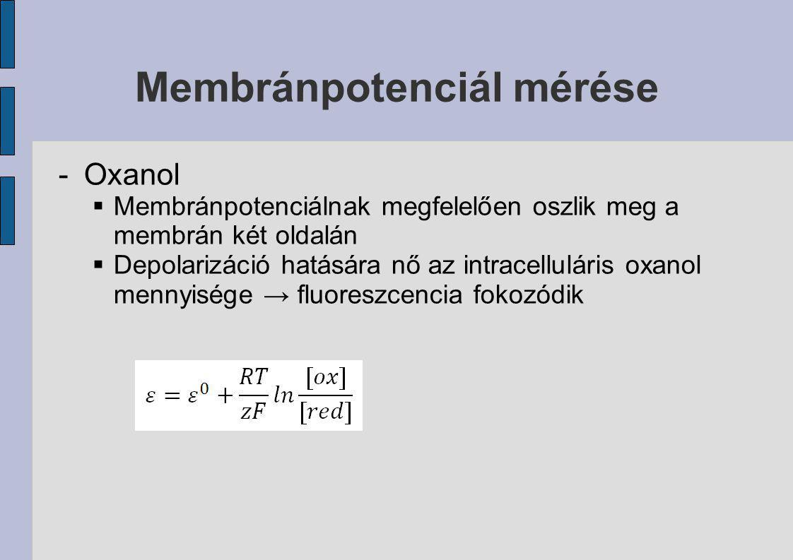 Membránpotenciál mérése -Oxanol  Membránpotenciálnak megfelelően oszlik meg a membrán két oldalán  Depolarizáció hatására nő az intracelluláris oxan