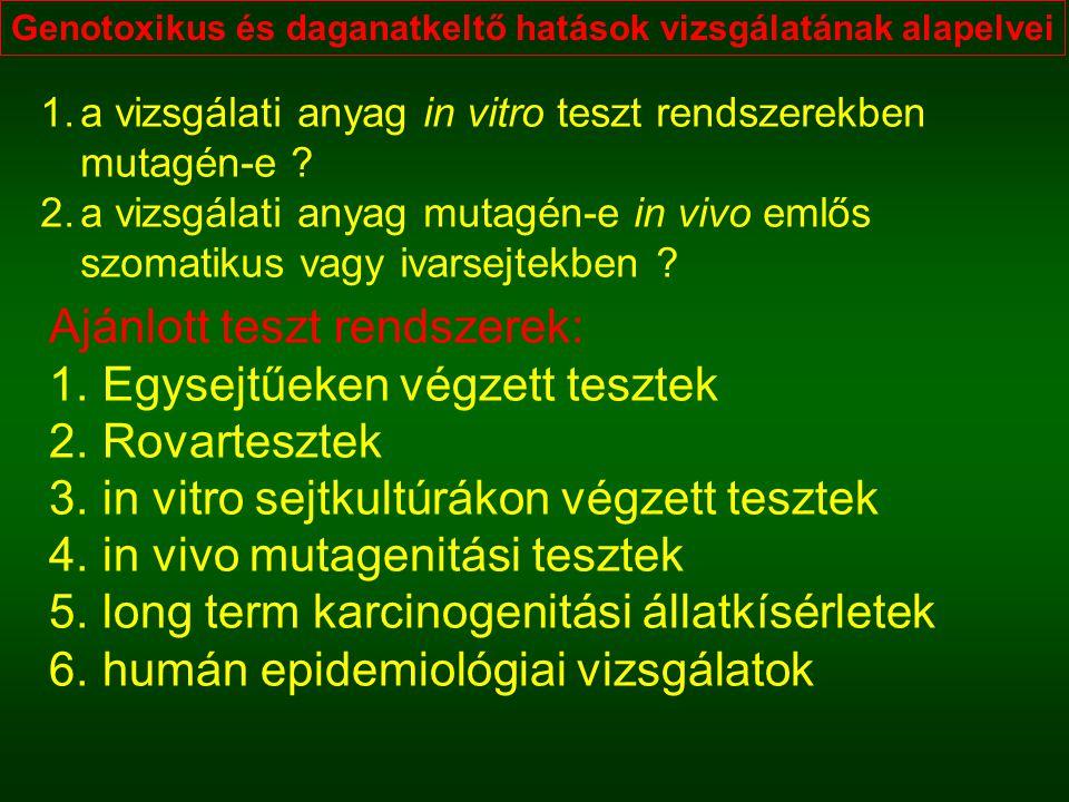 Genotoxikus és daganatkeltő hatások vizsgálatának alapelvei 1.a vizsgálati anyag in vitro teszt rendszerekben mutagén-e ? 2.a vizsgálati anyag mutagén