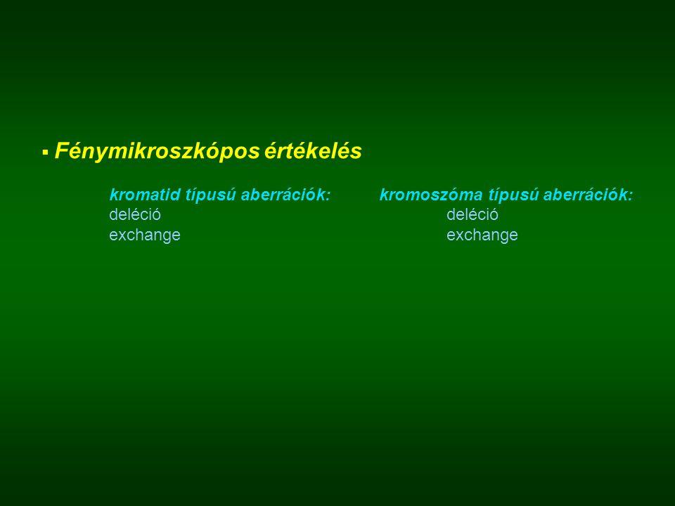  Fénymikroszkópos értékelés kromatid típusú aberrációk:kromoszóma típusú aberrációk:delécióexchange