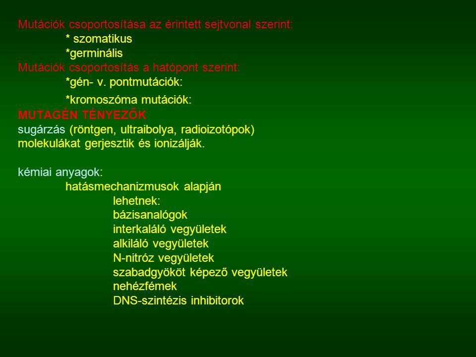 Mutációk csoportosítása az érintett sejtvonal szerint: * szomatikus *germinális Mutációk csoportosítás a hatópont szerint: *gén- v. pontmutációk: *kro