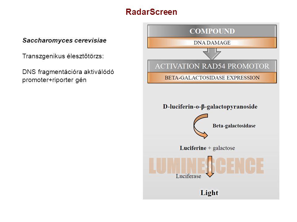 RadarScreen Saccharomyces cerevisiae Transzgenikus élesztőtörzs: DNS fragmentációra aktiválódó promoter+riporter gén
