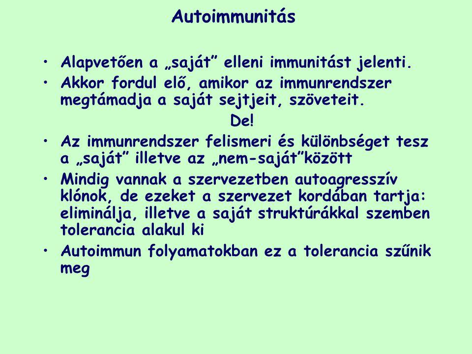 """Autoimmunitás Alapvetően a """"saját"""" elleni immunitást jelenti. Akkor fordul elő, amikor az immunrendszer megtámadja a saját sejtjeit, szöveteit. De! Az"""