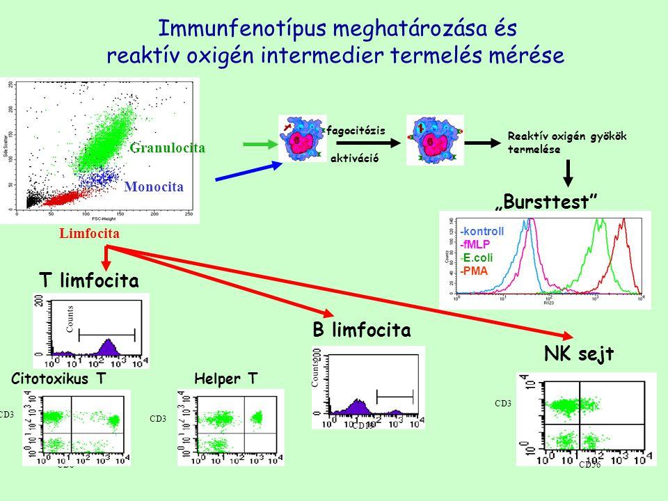 """Granulocita Monocita Limfocita -kontroll -fMLP -E.coli -PMA Immunfenotípus meghatározása és reaktív oxigén intermedier termelés mérése """"Bursttest"""" B l"""
