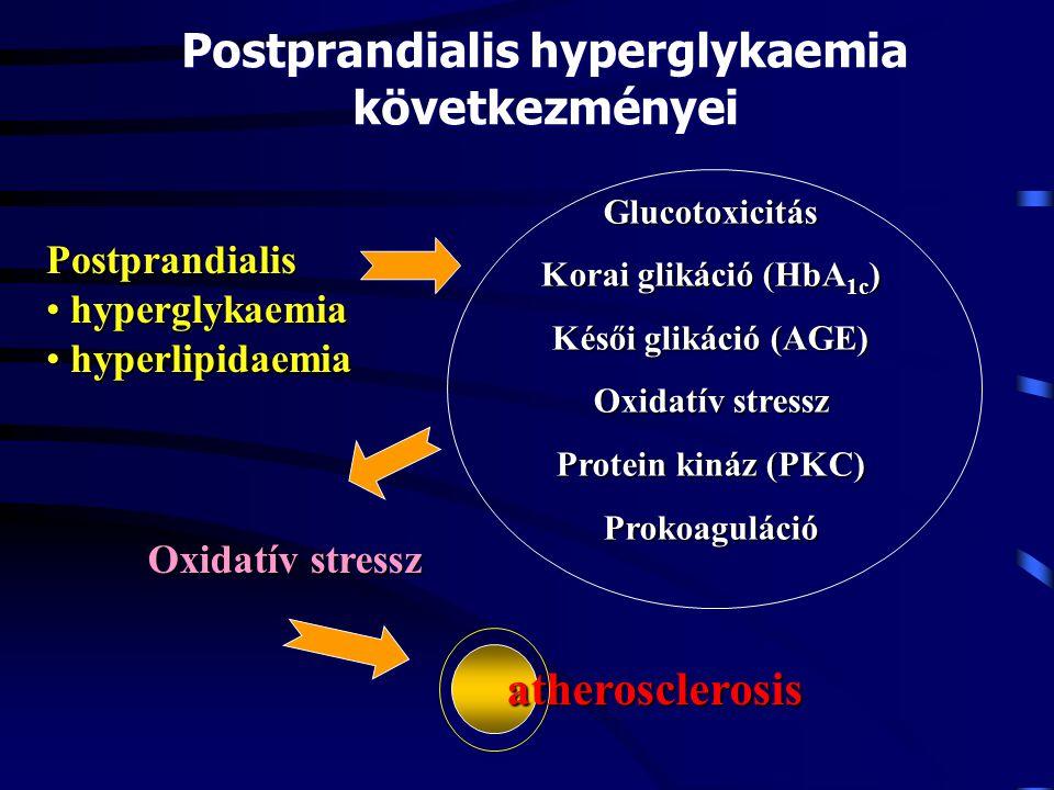 Glucotoxicitás Korai glikáció (HbA 1c ) Késői glikáció (AGE) Oxidatív stressz Protein kináz (PKC) Prokoaguláció Postprandialis hyperglykaemia következ