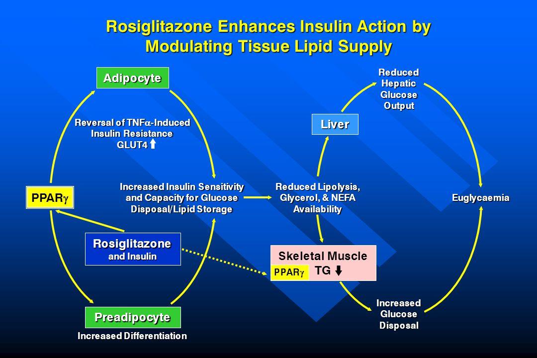 Rosiglitazone Enhances Insulin Action by Modulating Tissue Lipid Supply ReducedHepaticGlucoseOutput Liver Reduced Lipolysis, Glycerol, & NEFA Availabi
