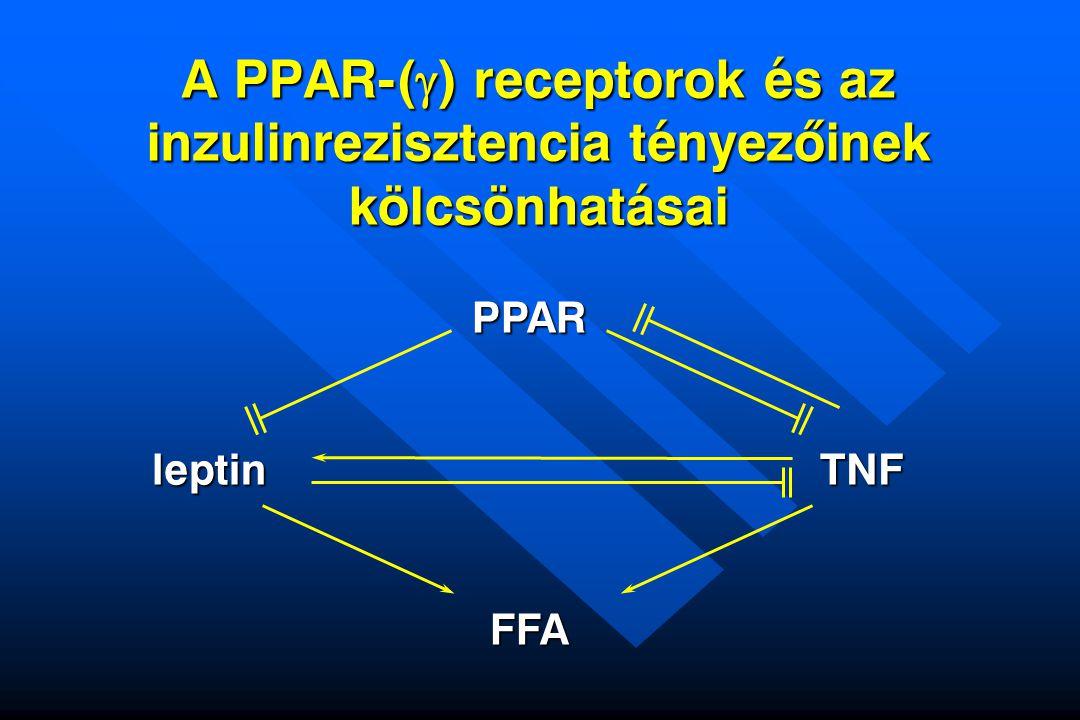 A PPAR-(  ) receptorok és az inzulinrezisztencia tényezõinek kölcsönhatásai PPAR FFA leptinTNF