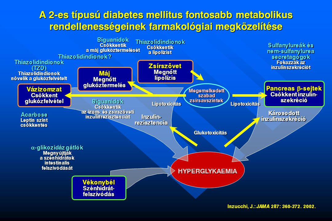 A 2-es típusú diabetes mellitus fontosabb metabolikus rendellenességeinek farmakológiai megközelítése Thiazolidindionok Thiazolidindionok növelik a glukózfelvételt Vázizomzat Csökkent glukózfelvétel Acarbose Leptin szint csökkentés Thiazolidindionok .