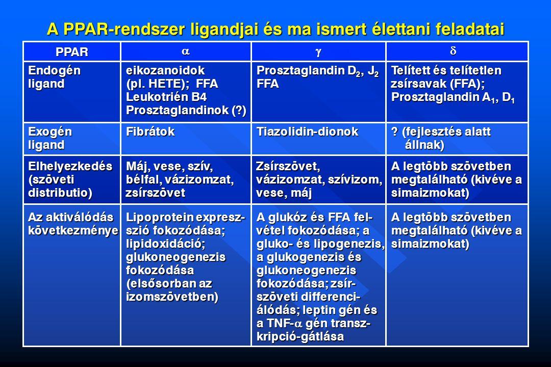 A PPAR-rendszer ligandjai és ma ismert élettani feladatai Endogén ligand eikozanoidok (pl. HETE); FFA Leukotrién B4 Prosztaglandinok (?) Prosztaglandi