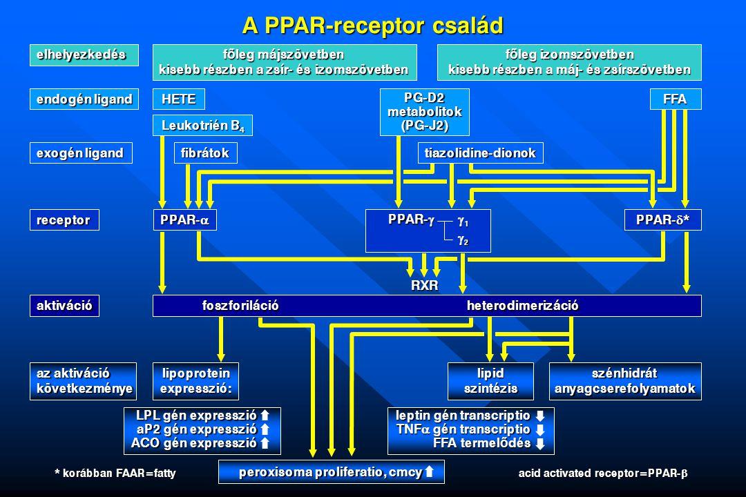 A PPAR-receptor család elhelyezkedés f ő leg májszövetben kisebb részben a zsír- és izomszövetben f ő leg izomszövetben kisebb részben a máj- és zsírs