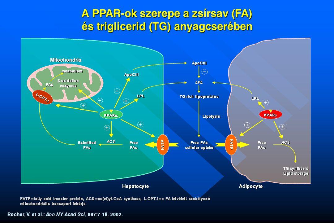 A PPAR-ok szerepe a zsírsav (FA) és triglicerid (TG) anyagcserében Bocher, V. et al.: Ann NY Acad Sci, 967:7-18. 2002. FAs catabolism Mitochondria Hep