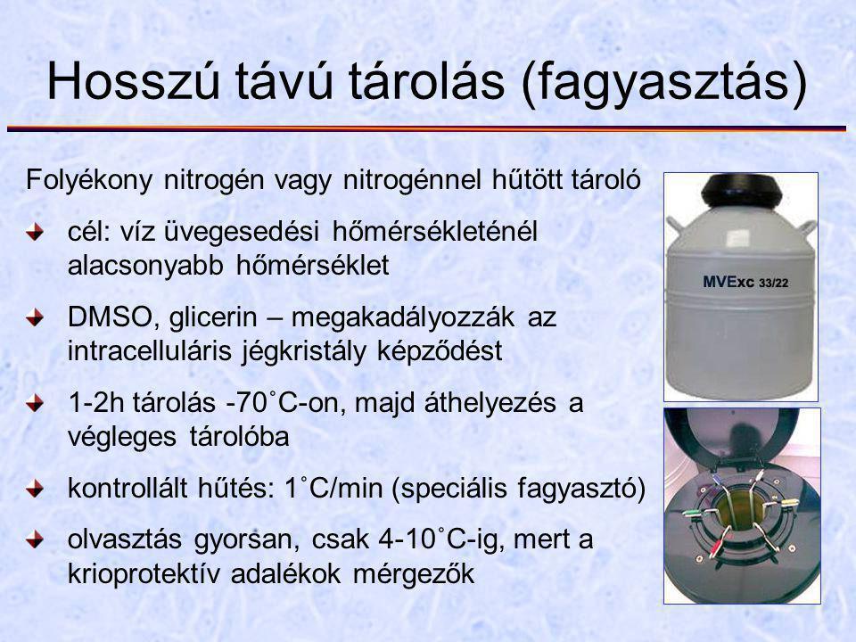 Hosszú távú tárolás (fagyasztás) Folyékony nitrogén vagy nitrogénnel hűtött tároló cél: víz üvegesedési hőmérsékleténél alacsonyabb hőmérséklet DMSO, glicerin – megakadályozzák az intracelluláris jégkristály képződést 1-2h tárolás -70˚C-on, majd áthelyezés a végleges tárolóba kontrollált hűtés: 1˚C/min (speciális fagyasztó) olvasztás gyorsan, csak 4-10˚C-ig, mert a krioprotektív adalékok mérgezők