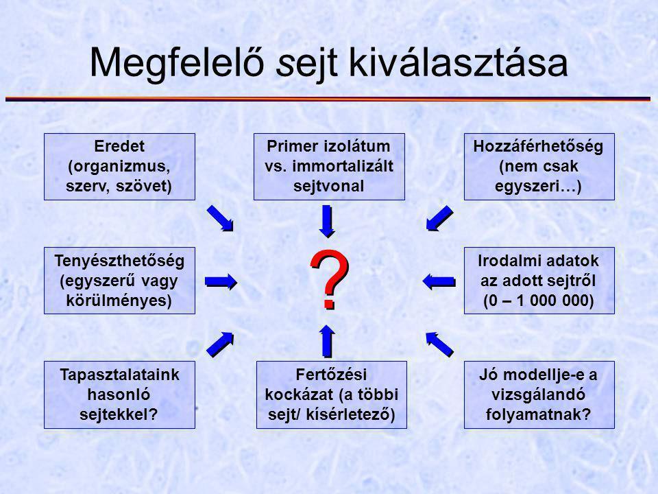 Megfelelő sejt kiválasztása Eredet (organizmus, szerv, szövet) Primer izolátum vs. immortalizált sejtvonal Hozzáférhetőség (nem csak egyszeri…) Tenyés