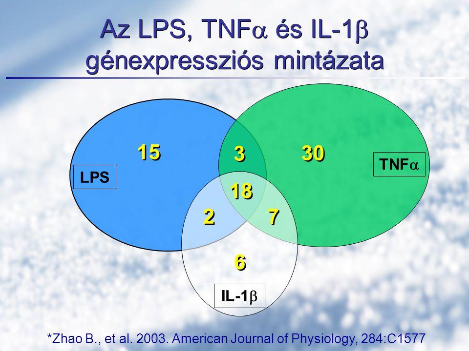 Az LPS, TNF  és IL-1  génexpressziós mintázata LPS TNF  IL-1  15 3 3 2 2 7 7 30 6 6 18 *Zhao B., et al. 2003. American Journal of Physiology, 284: