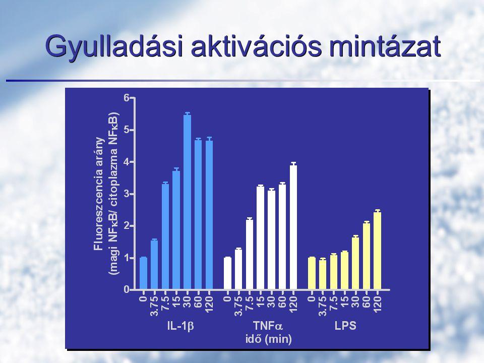 Gyulladási aktivációs mintázat