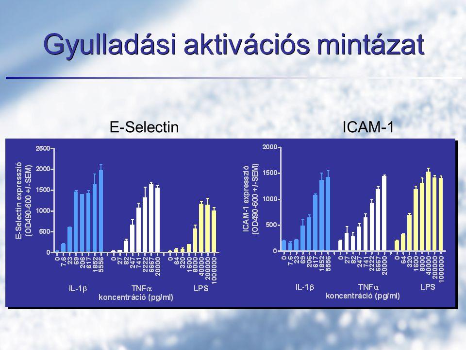 Gyulladási aktivációs mintázat E-SelectinICAM-1