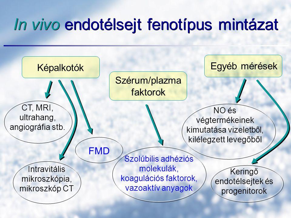 In vivo endotélsejt fenotípus mintázat Képalkotók Szérum/plazma faktorok Egyéb mérések CT, MRI, ultrahang, angiográfia stb.