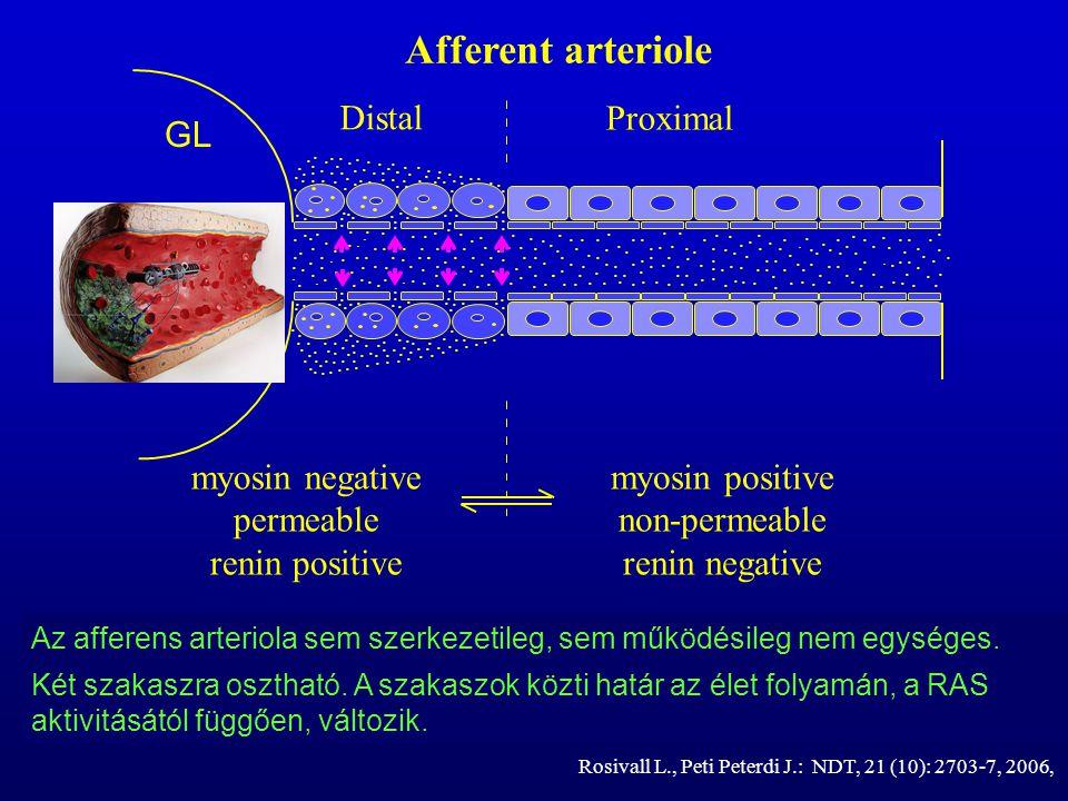 ... Az afferens arteriola sem szerkezetileg, sem működésileg nem egységes. Két szakaszra osztható. A szakaszok közti határ az élet folyamán, a RAS akt