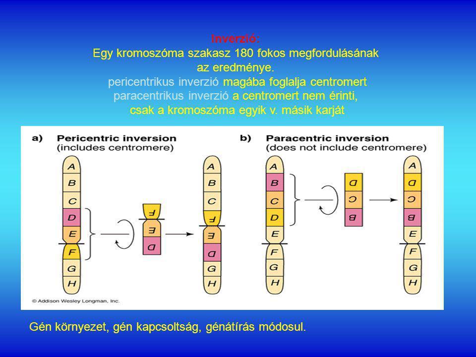 Inverzió: Egy kromoszóma szakasz 180 fokos megfordulásának az eredménye.