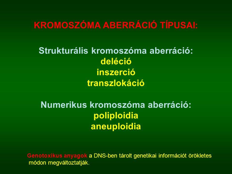 KROMOSZÓMA ABERRÁCIÓ TÍPUSAI: Strukturális kromoszóma aberráció: deléció inszerció transzlokáció Numerikus kromoszóma aberráció: poliploidia aneuploidia Genotoxikus anyagok a DNS-ben tárolt genetikai információt örökletes módon megváltoztatják.