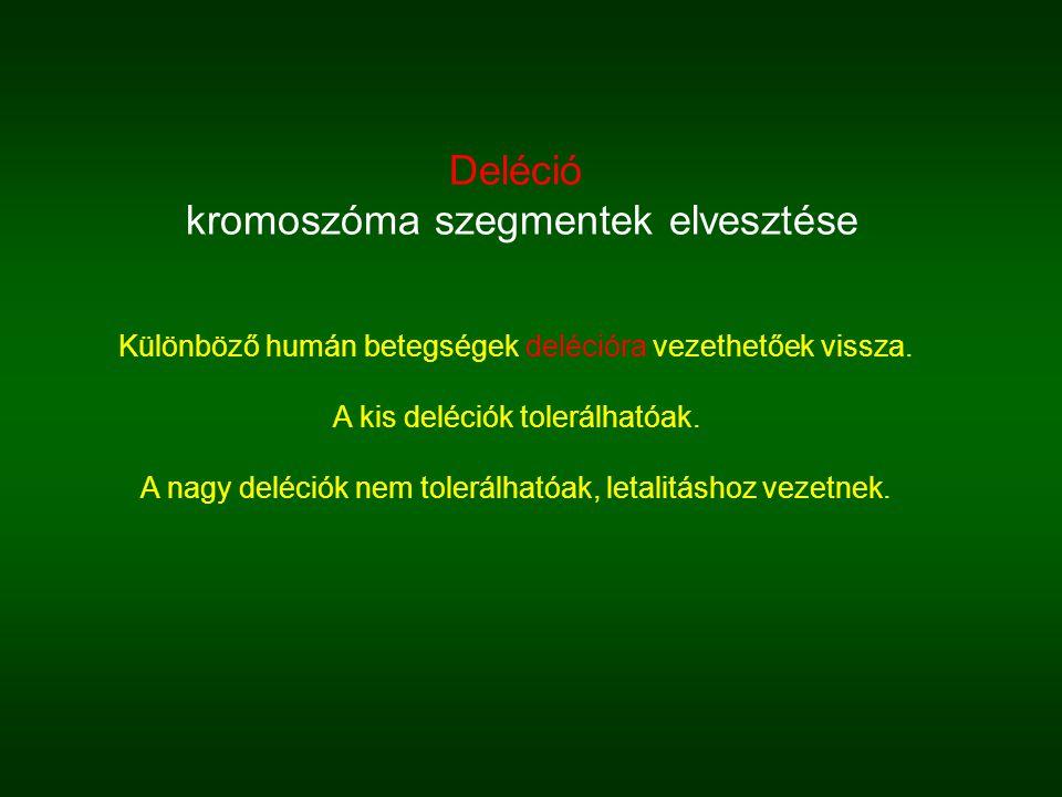 Deléció kromoszóma szegmentek elvesztése Különböző humán betegségek delécióra vezethetőek vissza.