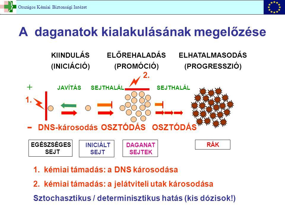 A daganatok kialakulásának megelőzése KIINDULÁS (INICIÁCIÓ) ELŐREHALADÁS (PROMÓCIÓ) ELHATALMASODÁS (PROGRESSZIÓ) JAVÍTÁSSEJTHALÁL DNS-károsodásOSZTÓDÁ