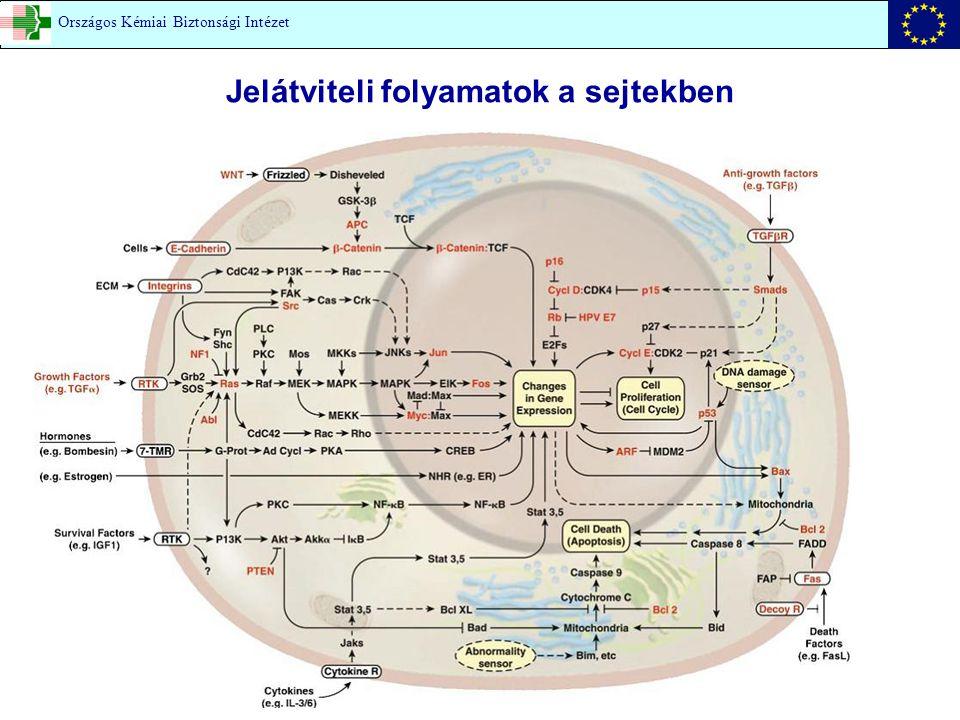 Jelátviteli folyamatok a sejtekben Országos Kémiai Biztonsági Intézet