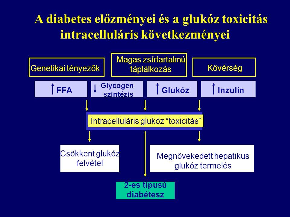 Genetikai tényezők Magas zsírtartalmú táplálkozás Kövérség FFA Glycogen szintézis GlukózInzulin Intracelluláris glukóz toxicitás Csökkent glukóz felvétel Megnövekedett hepatikus glukóz termelés 2-es típusú diabétesz A diabetes előzményei és a glukóz toxicitás intracelluláris következményei