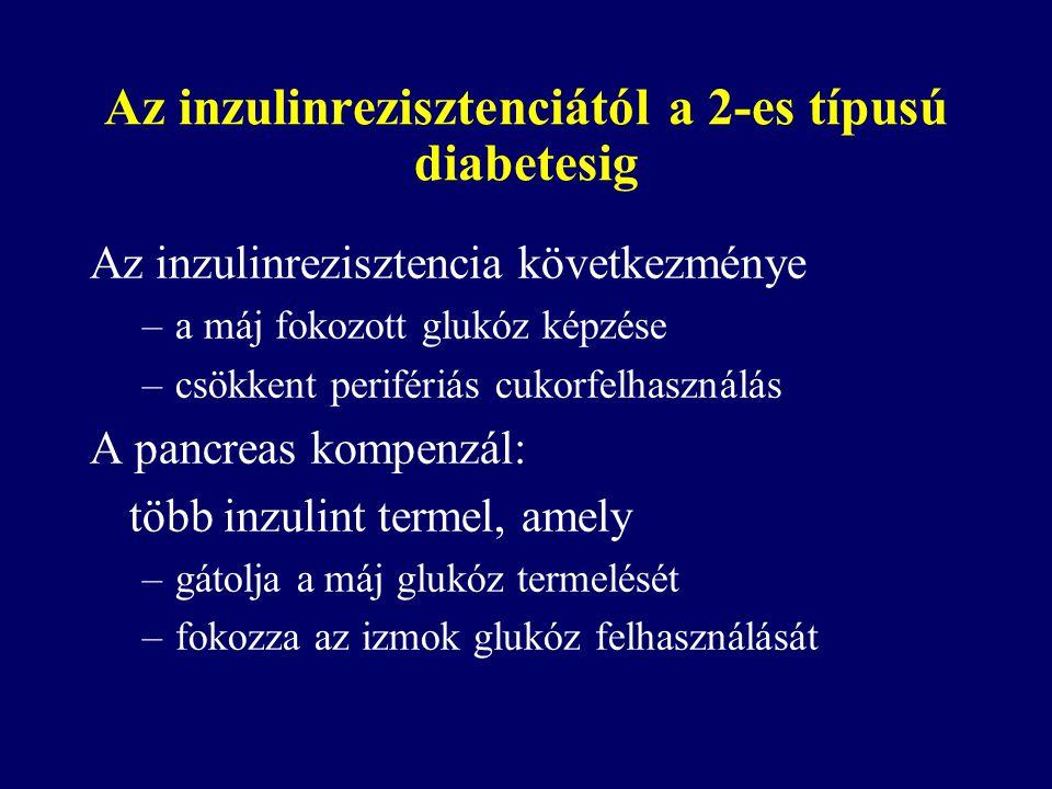 Az inzulinrezisztenciától a 2-es típusú diabetesig Az inzulinrezisztencia következménye –a máj fokozott glukóz képzése –csökkent perifériás cukorfelhasználás A pancreas kompenzál: több inzulint termel, amely –gátolja a máj glukóz termelését –fokozza az izmok glukóz felhasználását