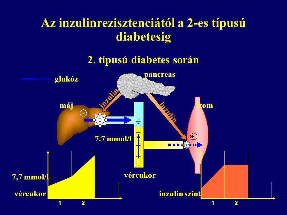 Az inzulinrezisztenciától a 2-es típusú diabetesig 2. típusú diabetes során pancreas izommáj vércukor 7.7 mmol/l inzulin glukóz vércukor 7,7 mmol/l 1