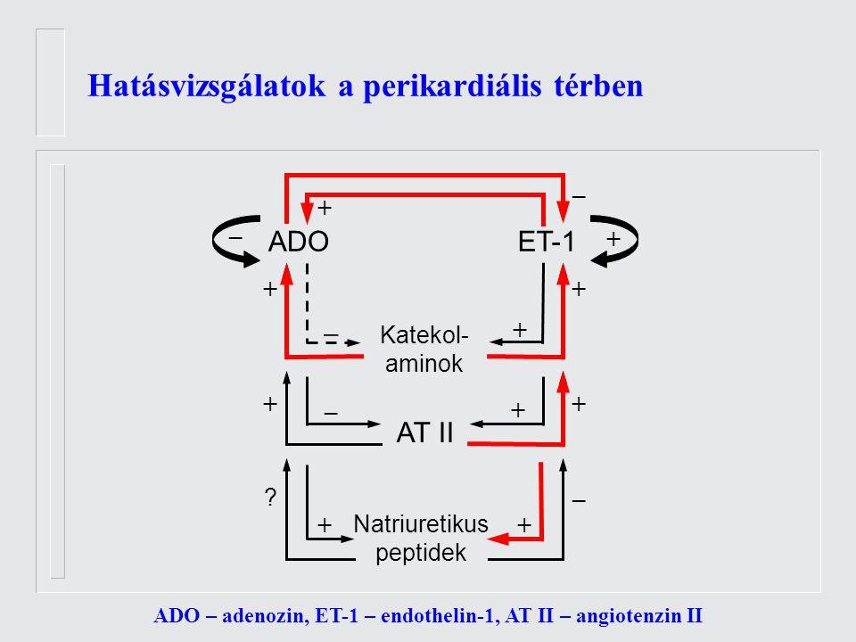 Hatásvizsgálatok a perikardiális térben ADO – adenozin, ET-1 – endothelin-1, AT II – angiotenzin II ADOET-1 Katekol- aminok Natriuretikus peptidek AT II ++ + + + + + + – + .