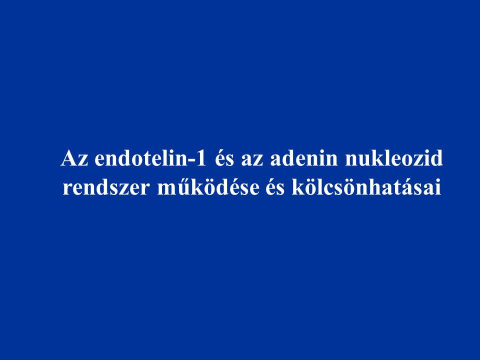 Az endotelin-1 és az adenin nukleozid rendszer működése és kölcsönhatásai