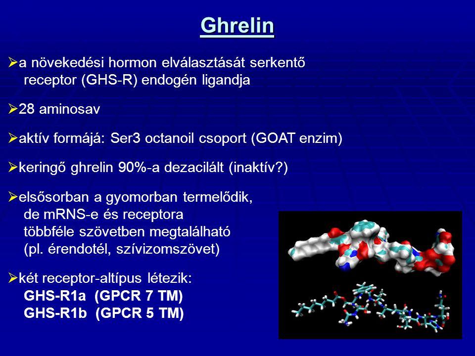 Ghrelin mRNS kópia szám  Legmagasabb kópiaszámban: Gyomor fundus Vékonybél Tüdő Pankreász Vese Vastagbél Hipothalamus  Alacsonyabb kópiaszámban: Limfocita Szívizomszövet ( Gnanapavan et al.