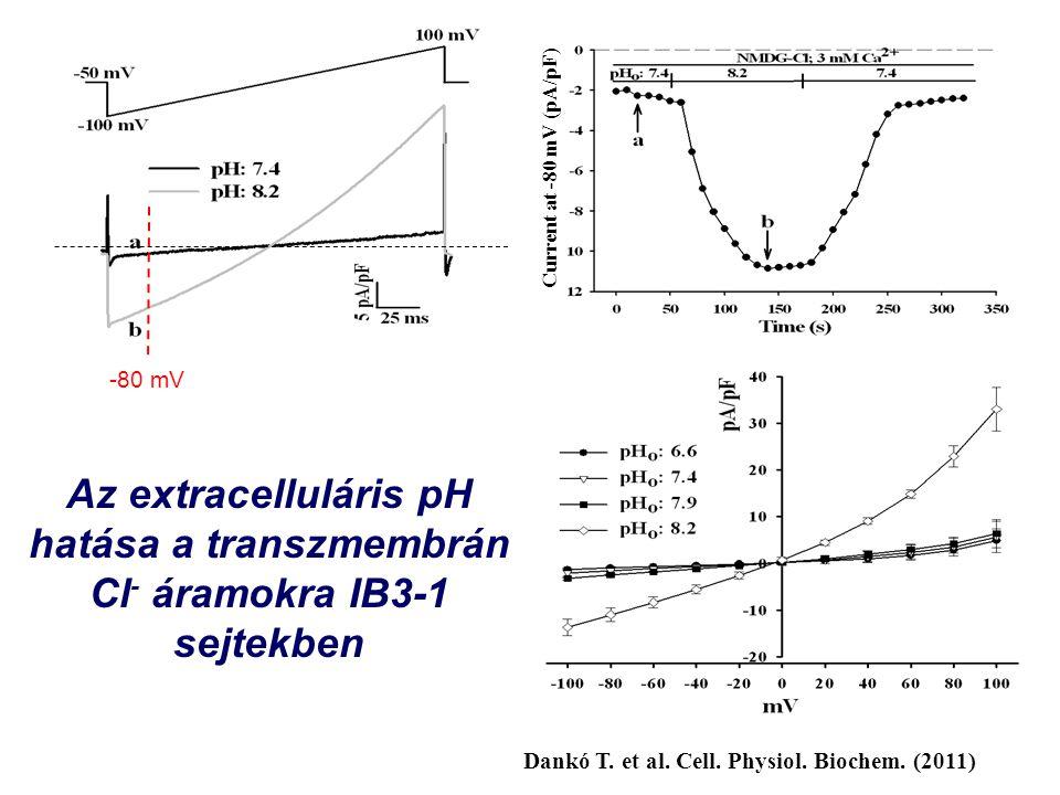 Az extracelluláris pH hatása a transzmembrán Cl - áramokra IB3-1 sejtekben Current at -80 mV (pA/pF) -80 mV Dankó T.